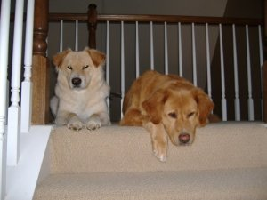 pupsofthestairs