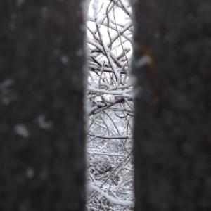 snowglimpse