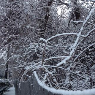snowyvines